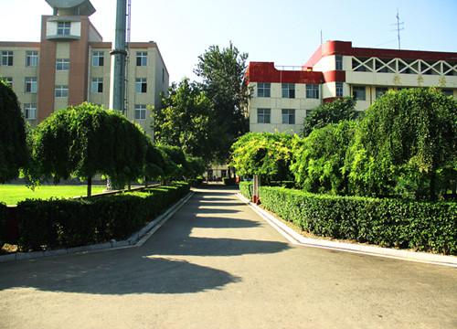 我学校南校区环境一角绿